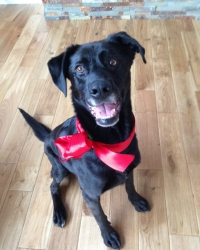 Jack the Dog (former Polisci Mascot)